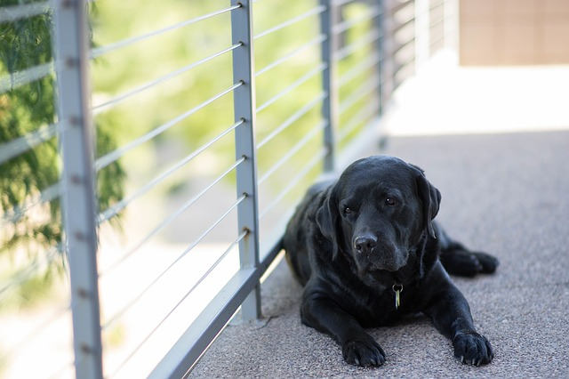 Auch dieser stubenreine Hund kackte in die Wohnung, bevor deren Besitzer gelernt haben sein Bellen richtig zu interpretieren