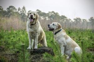 Dein Hund hört nicht aus verschiedenen Gründen, die Du heute erfahren wirst