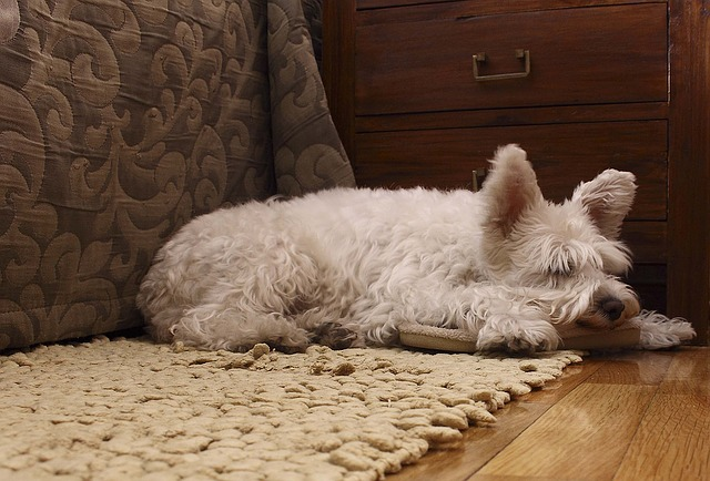 Der hier abgebildete Hund war ein Protespinkler, der in die Wohnung gepinkelt hat.