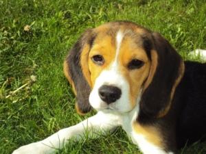 Wichtig für eine stressfreie Hundeerziehung ist, dass Du dich von deinem Hund nicht hinters Licht führen lässt