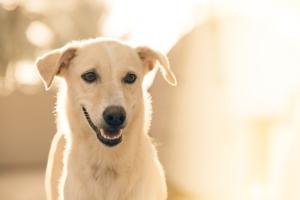 Hundeerziehung ohne Stress, wie Du das hinbekommst erfährst Du auf unserer Website
