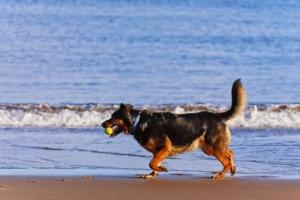 Du solltest wissen welche Bedeutung der wedelnde Schwanz eines Hundes tatsächlich hat