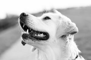 Wir empfehlen Dir, deinen Hund im Sinne einer stressfreien Erziehung deinen Hund verstehen zu lernen